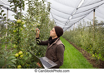 Engineer in orchard - Attractive agronomist with laptop...