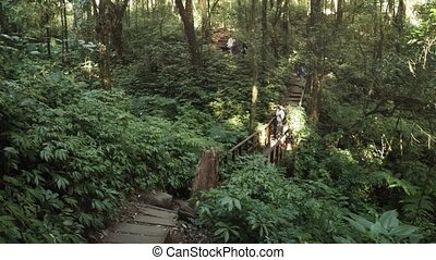 Visitors snap photos from an engineered hiking trail through a forested, tropical wilderness area near Chiang Mai, Thailand. FullHD 1080p footage
