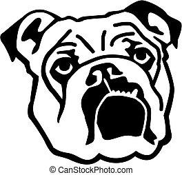 englische bulldogge, kopf