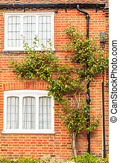 Red brick wall with windows and green ivy