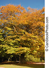 english autumn