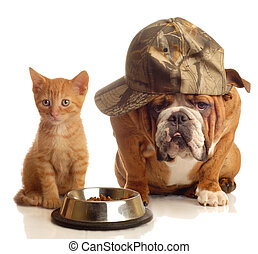 english bulldog and orange kitten sitting at food dish