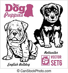 English Bulldog and Rottweiler - Dog Puppies. Vector set. Funny dogs puppy pet characters different breads doggy illustration isolated on white.