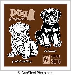English Bulldog and Rottweiler - Dog Puppies. Vector set. Funny dogs puppy pet characters different breads doggy illustration isolated on dark.