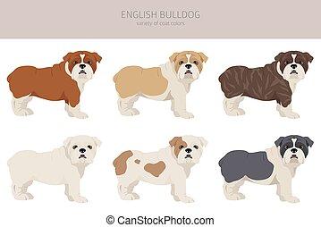 English bulldog clipart. Different poses, coat colors set.