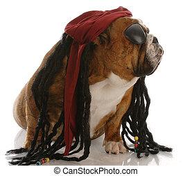 english bulldog dressed up as a pirate