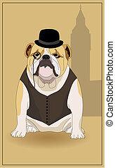 English Bulldog - English bulldog and symbol of England....