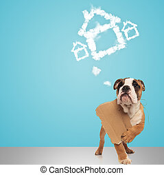 english bulldog holding sign and dreams of a new home
