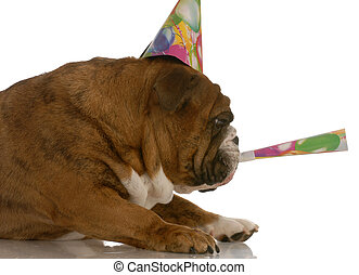 english bulldog party hat blowing on horn
