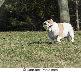dog playing catch