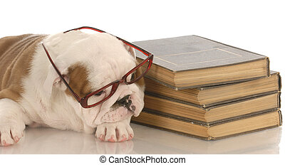 english bulldog puppy laying down beside a stack of books