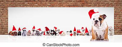 english bulldog  santa leads large team of animals near billboard