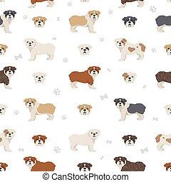 English bulldog seamless pattern. Different poses, coat colors set