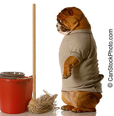 janitor - english bulldog standing up beside mop and bucket...