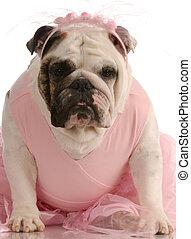 english bulldog wearing pink tutu on white background