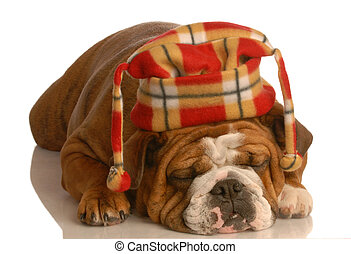 english bulldog wearing plaid hat