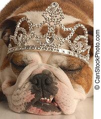 english bulldog wearing princess crown or tiara