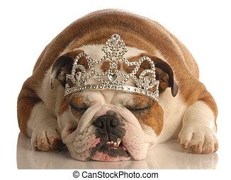 english bulldog wearing princess crown or tiara isolated on white background
