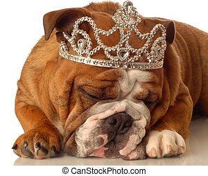 english bulldog wearing princess crown and silly expression