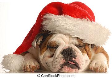 english bulldog wearing santa hat with tongue sticking out