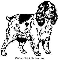 english cocker spaniel black white - dog english cocker...