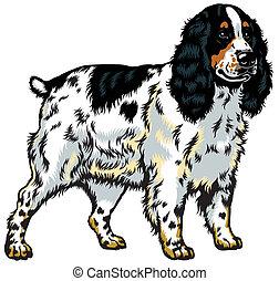 english cocker spaniel - dog english cocker spaniel breed,...