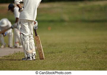 English Cricket - Cricket Game