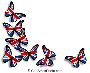 English flag butterflies, isolated on white background