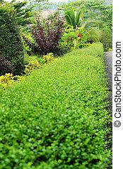 English garden.