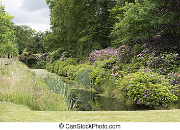 english garden with Rhododendron