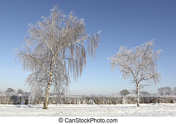 english landscape with two frost covered silver birch trees hedgerows and deep snow under a clear blue sky