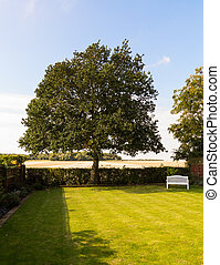 English lawn garden with large tree