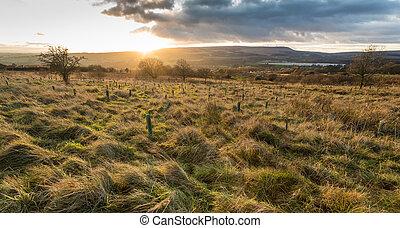 English Moorland - Evening sky over an English countryside...