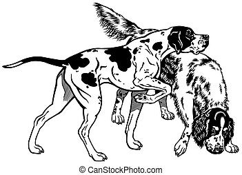 english pointer and setter gun dog breeds, black and white image