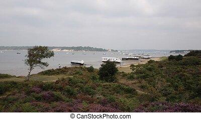 English purple heather Poole uk - View to Brownsea Island...