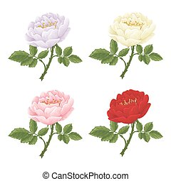 English rose graphic flowers. - English rose graphic...
