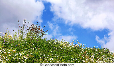 English summer meadow