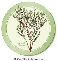 English Thyme Herb Icon - English thyme icon, popular garden...