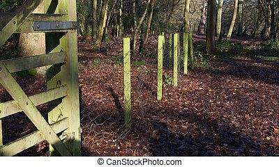 English woodland scene with green fence posts and green forest gate