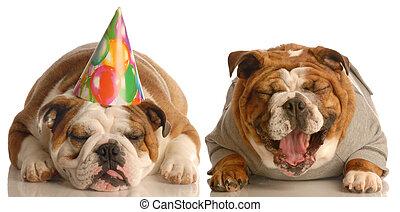 engraçado, aniversário, cachorros