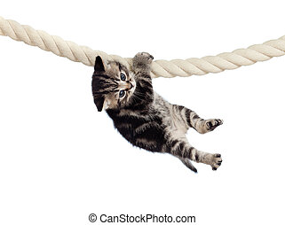 engraçado, bebê, gato, pendurar, corda