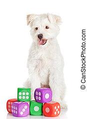 ENGRAÇADO, branca, brinquedos, cão, isolado