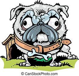 engraçado, cão, isolado