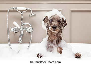 engraçado, cão, levando, borbulhe banho