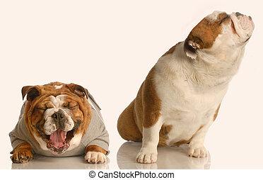 engraçado, cão, luta