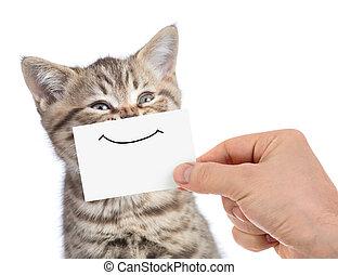 engraçado, feliz, jovem, gato, retrato, com, sorrizo, ligado, papelão, isolado, branco