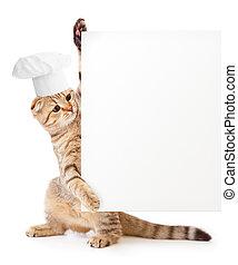 engraçado, gatinho, em, cozinheiro, chapéu, segurando, menu,...