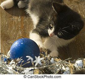 engraçado, gatinho, ornamentos natal