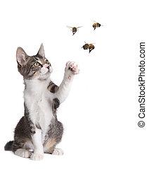 engraçado, gato, pegando, abelhas