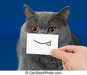 engraçado, gato, retrato, com, sorrizo